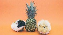Día Mundial de los Animales: ¿Se aceptan mascotas?